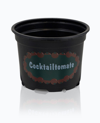9 Cocktailtomate