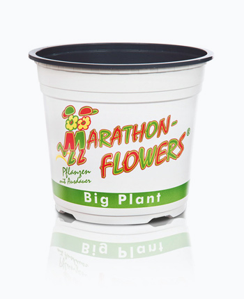 20 Marathonflowers